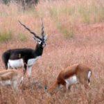 Sorasan Wildlife Sanctuary | Natural Places in Baran