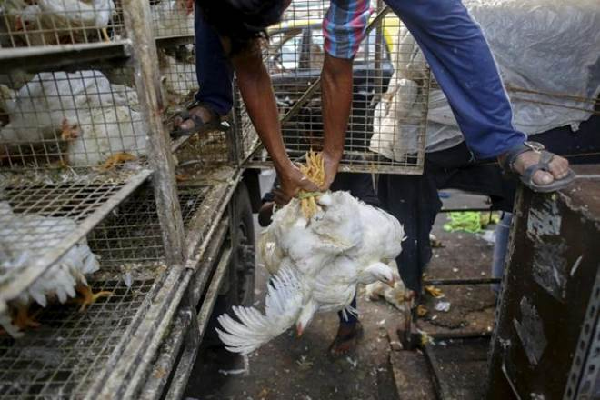 Bird Flu alert in Rajasthan