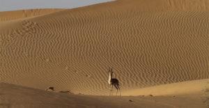 desert-np