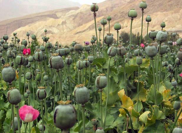 Opium-Doda Addiction in Rajasthan: Social Issue