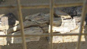 akal-wood-fossil-park