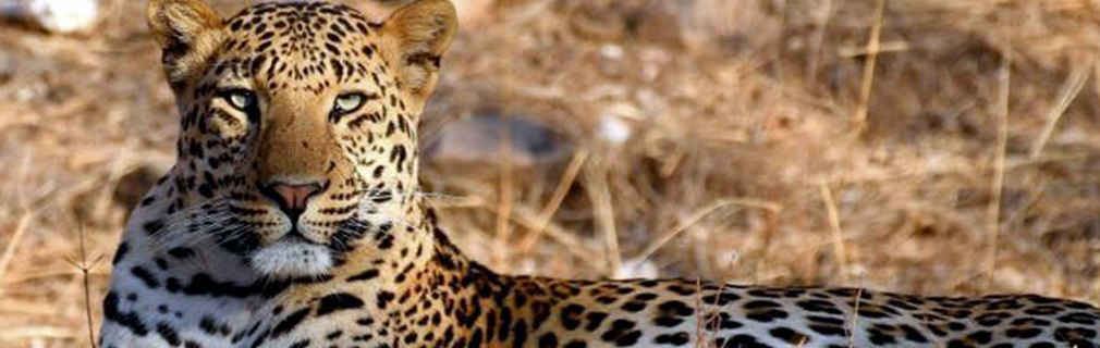 Rajasthan: 1st State in India to launch Project Leopard