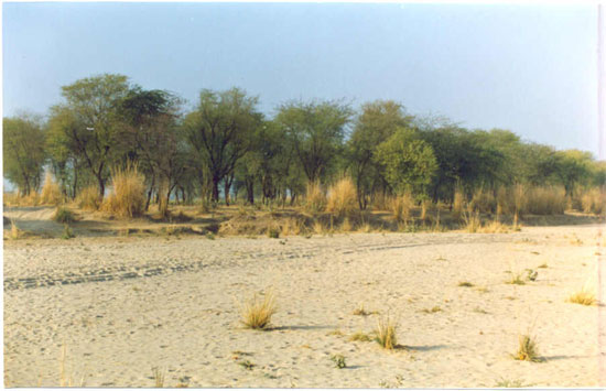 Rajasthan Is The State With Highest Area Under Desertification Land Degradation With Respect To Country S Total Geographical Area Tga