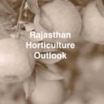 Rajasthan Horticulture Outlook