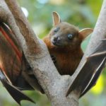 Nipah Virus - Causes, Symptoms, Prevention, Spread, India