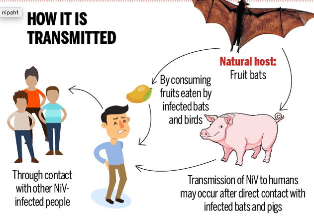 Nipah Virus Transmission Spread