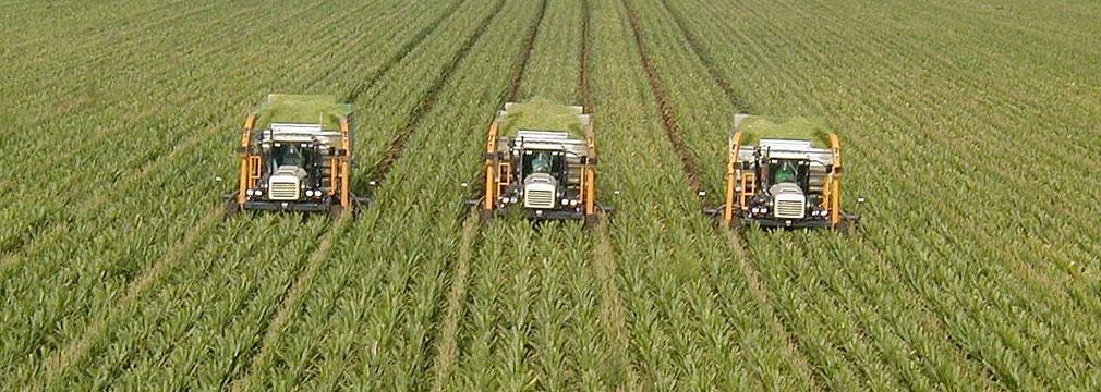 Quinoa - Nanotechnology Pesticides