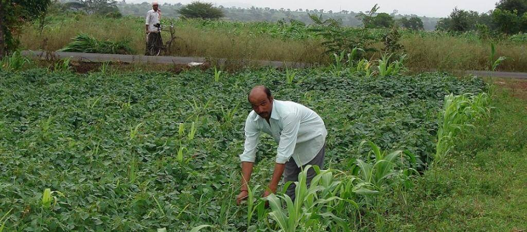 Zero-Budget-Natural-Farming ZBNF Rajasthan