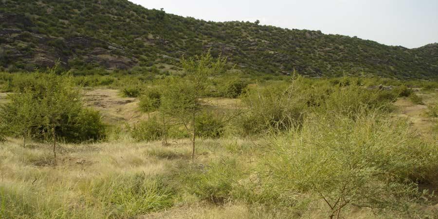 Beed Jhunjhunu Conservation Reserve | Beer Jhunjhunu