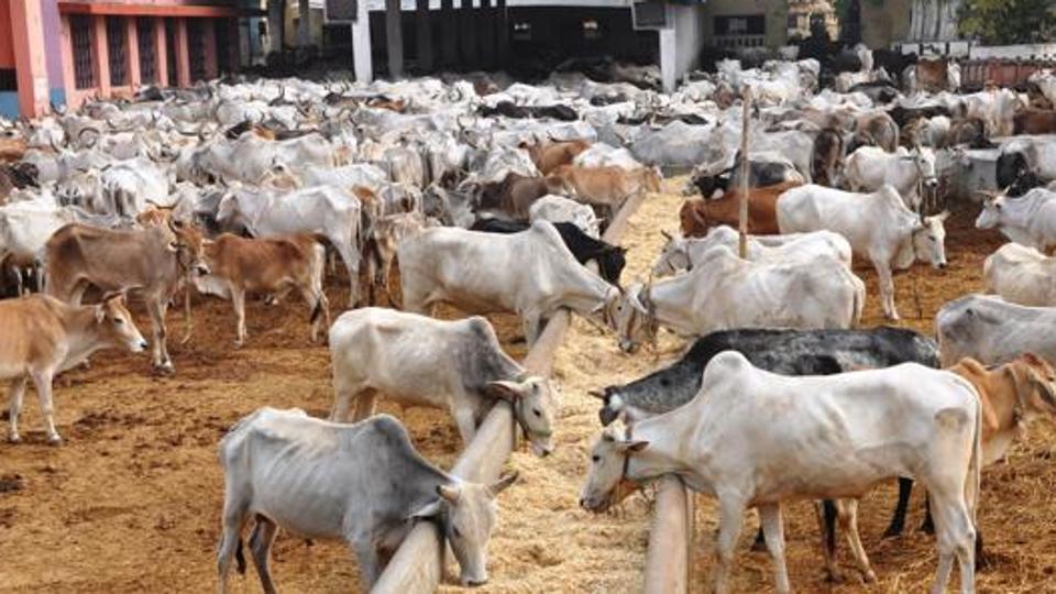 Basics of Livestock