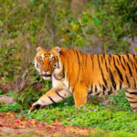 types of protected area in india | Kumbhalgarh Tiger Reserve proposal