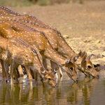 Band Baretha Wildlife Sanctuary