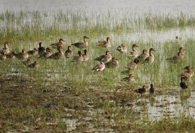 Ramsagar Wildlife Sanctuary in Dhlopur Rajasthan | Kesarbagh Wildlife Sanctuary