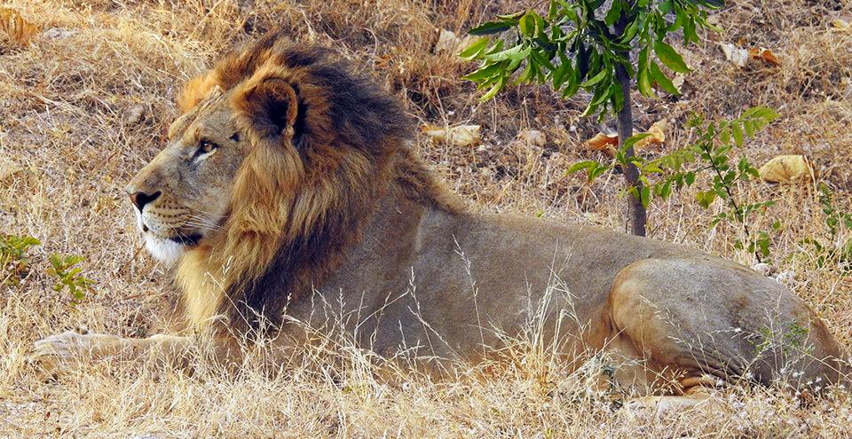 Sajjangarh Wildlife Sanctuary Biological Park