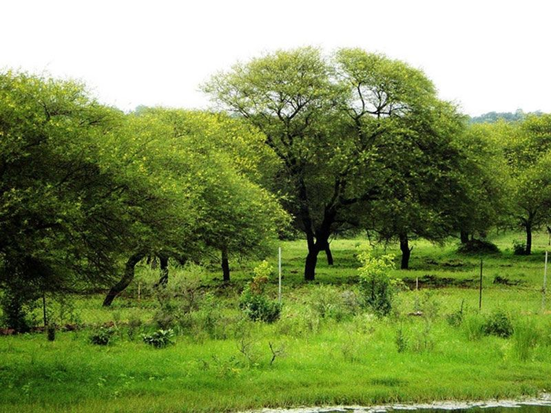 Van Vihar Wildlife Sanctuary Dholpur