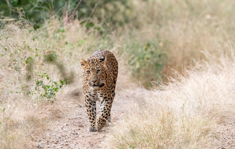 Wildlife National Parks in Rajasthan