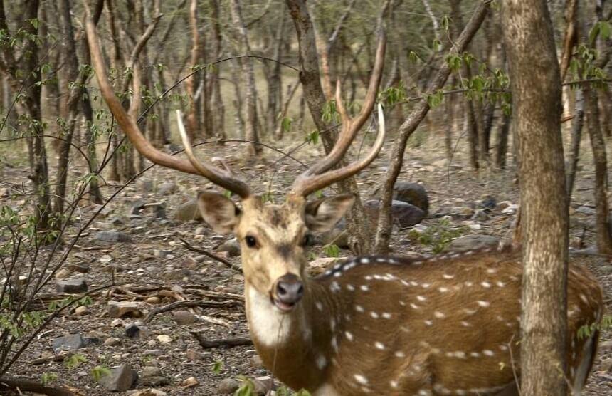 Sawai Mansingh Wildlife Sanctuary