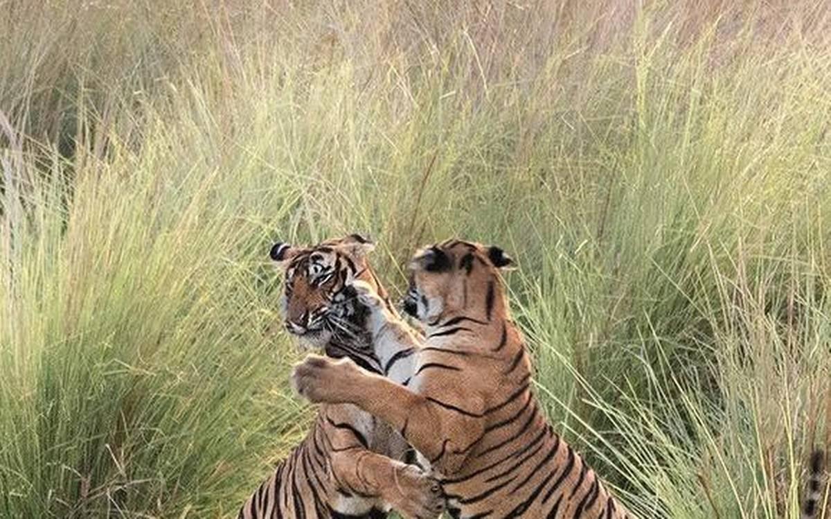 Kailadevi Wildlife Sanctuary in Karauli Rajasthan
