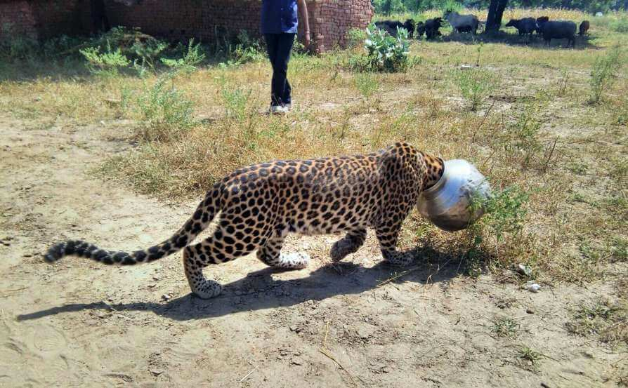 Human Wildlife Conflict in Rajasthan