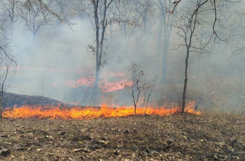 Image-Forest fires in Rajasthan
