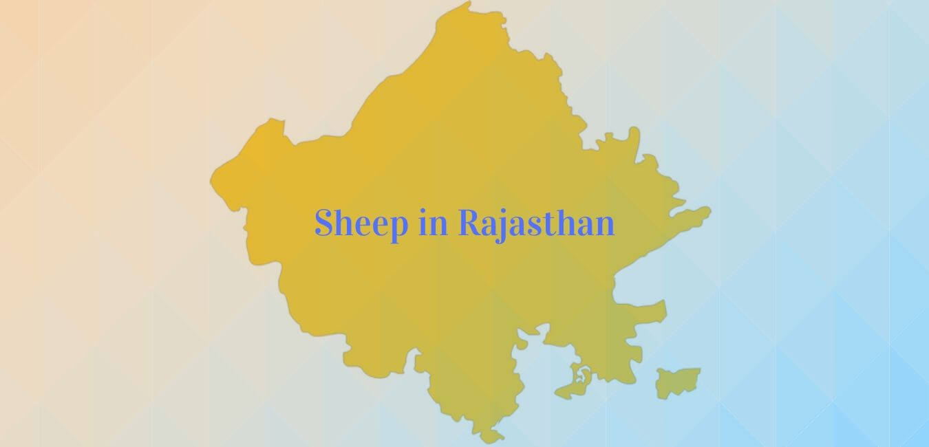 Population of Breeds of Sheep in Rajasthan