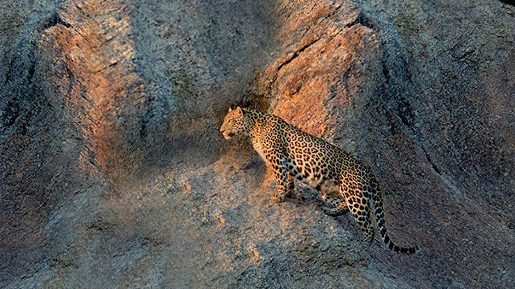 Jungle Safari in Jawai