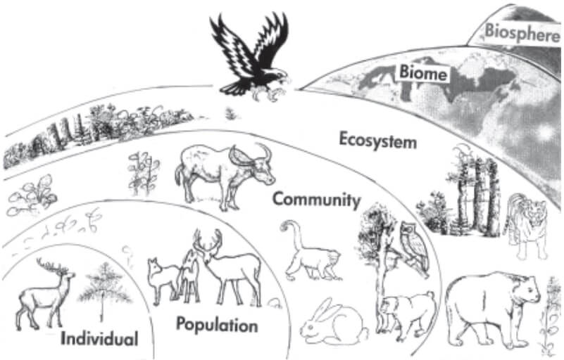 Levels of Ecological Organizations