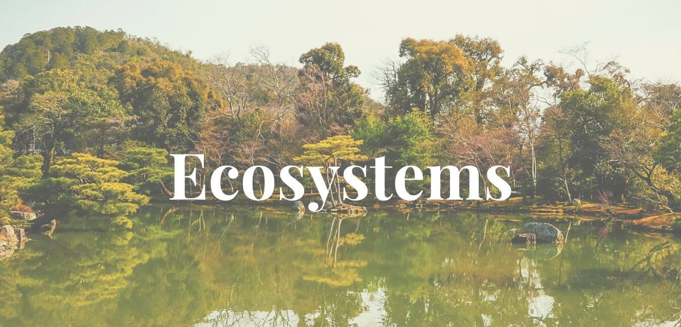 Structure Functions Components of ecosystem