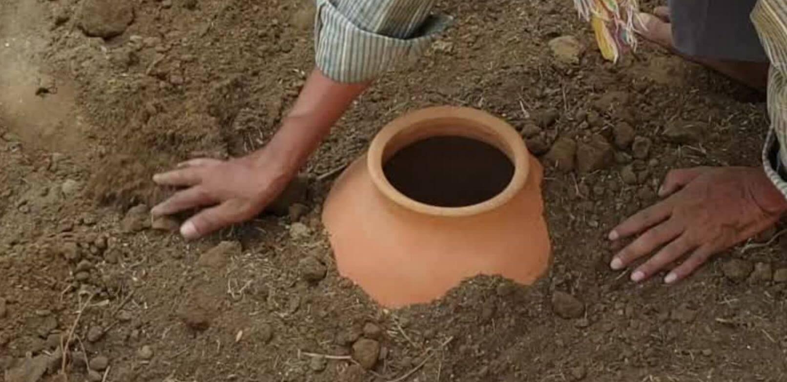 Buried Clay Pot Plantation Technique