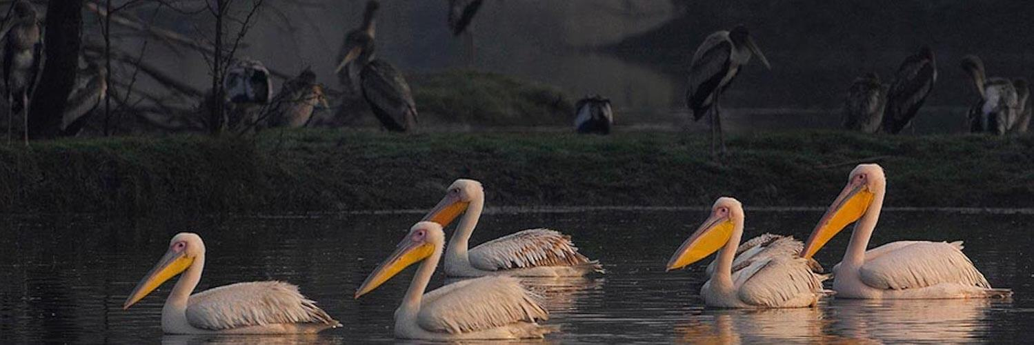 Bharatpur: History, Geography, Places to Visit