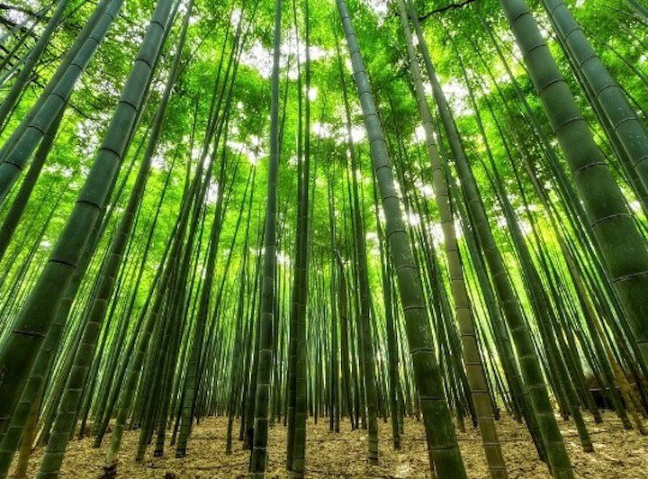 Project BOLD: Bamboo Oasis on Lands in Drought launched in Udaipur