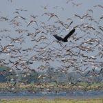 Ramsar recognition 2021