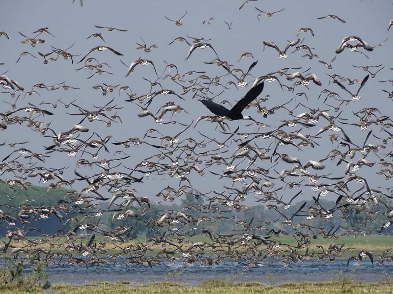 Four Indian sites get Ramsar recognition in 2021